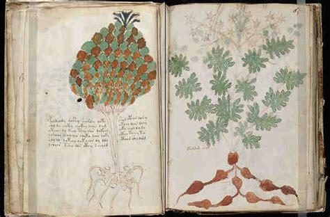 libro el herbario de las el codice voynich o manuscrito voynich
