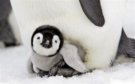 animals in the winter cute baby penguin animals baby beautiful birds cute