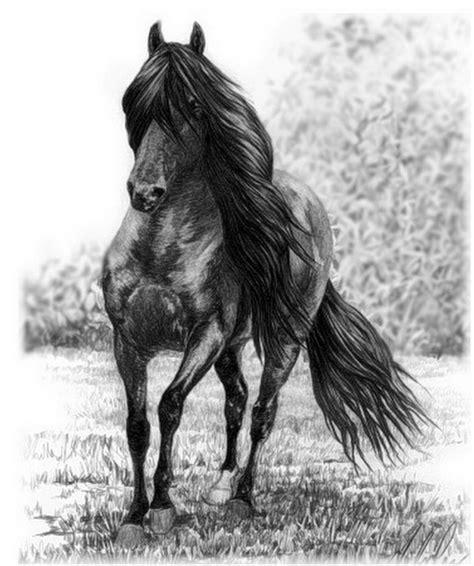 blanco y negro pintura lineal dibujar caballo ilustraci 243 n im 225 genes arte pinturas dibujos hiperrealistas de caballos