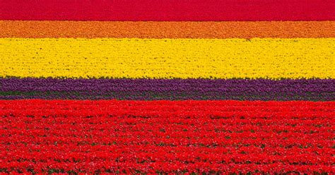 netherlands tulip fields tulip fields netherlands 83 unreal places you thought