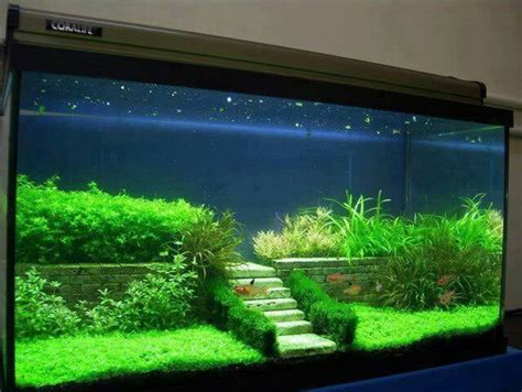 aquascape fish tank aquascaping fairy terrarium and aquarium on pinterest