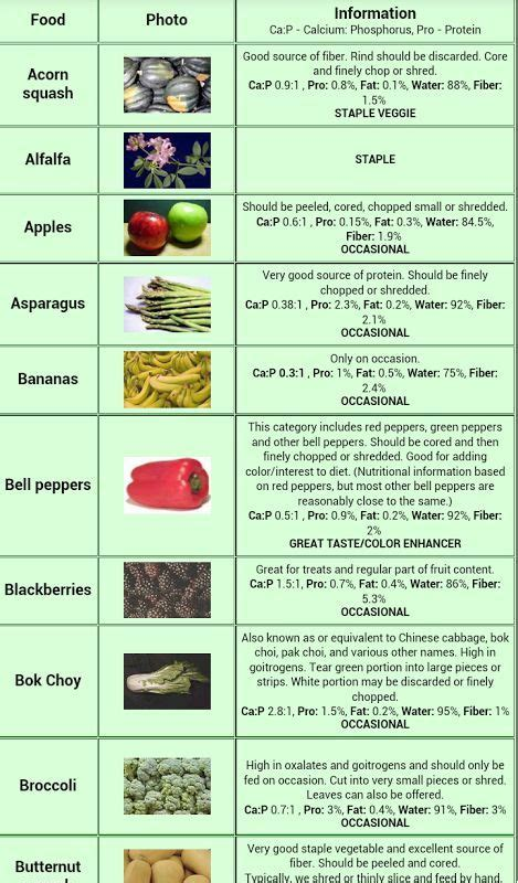 7 Things Not To Feed Your Bearded by Bearded Food Chart Search Hibians