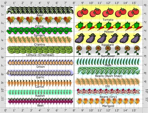How To Layout A Garden Vegetable Garden Layout Diagram Vegetable Free Engine Image For User Manual