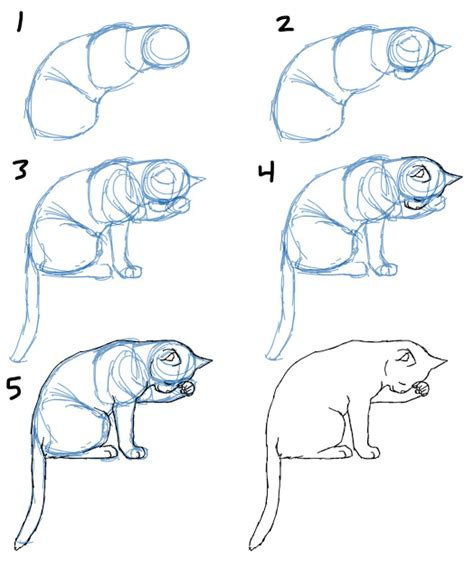 doodle cat drawing savanna williams how to draw cat bodies in poses