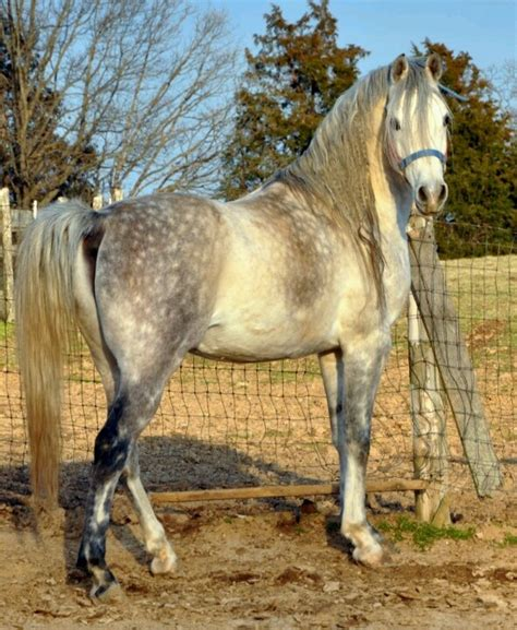 pictures mustang horse with smoke 17 best images about horses smoke on pinterest horses