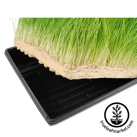 Growing Mats by Micro Mats Hydroponic Growing Pads For Wheatgrass Microgreens More