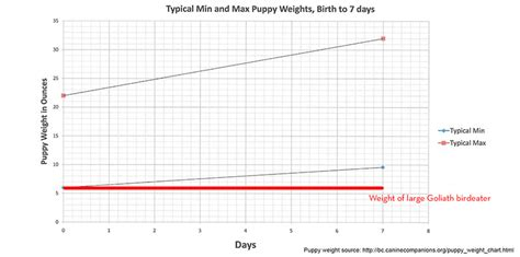 chihuahua puppy growth chart chihuahua puppy growth chart in grams