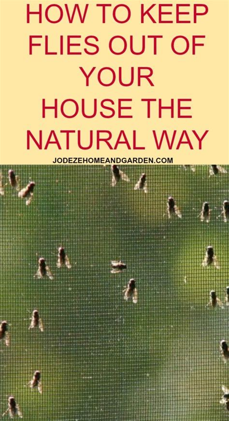 how to kill flies in house how to kill flies in house 28 images how to get rid of gnats in your house tiny