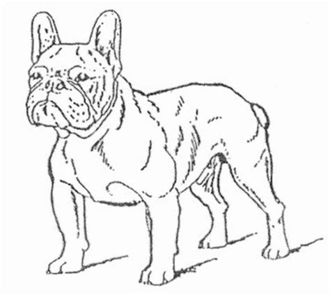 french bulldog face coloring coloring pages