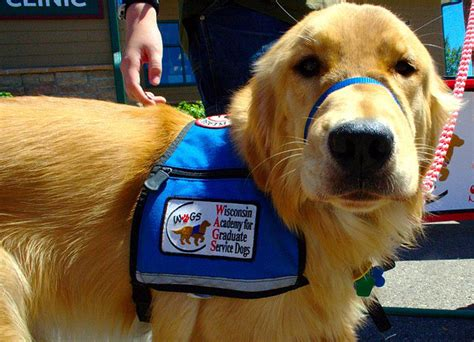 Trained Service Dogs Reduce Ptsd Symptoms