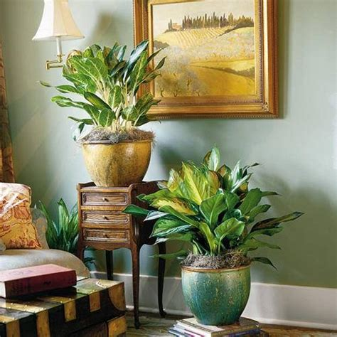 Home Decor Plants Living Room | home designs and decor beautiful amazing indoor plants