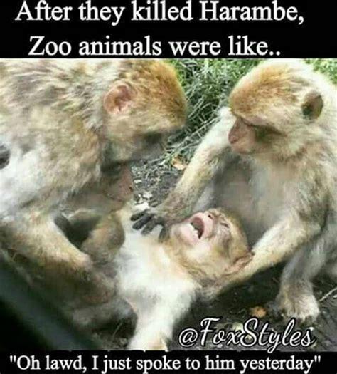 gorilla meme must see harambe the gorilla memes page 12 bossip
