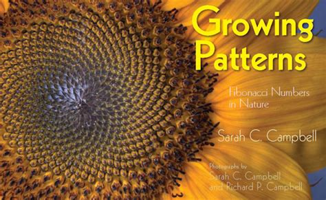 number pattern in nature review of the day growing patterns by sarah c cbell