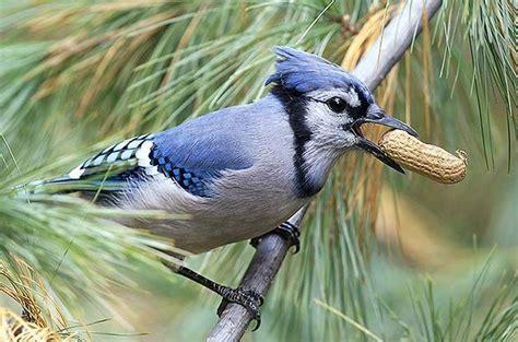 the 25 best backyard birds ideas on pinterest pretty