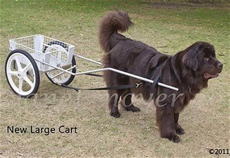rottweiler pulling competition carts harnesses for sale custom carts for drafting competition and