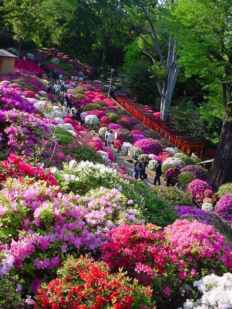 Id 233 Alement Pour La Plate Bande Du C 244 T 233 Azal 233 Es Et Flower Garden In Japan
