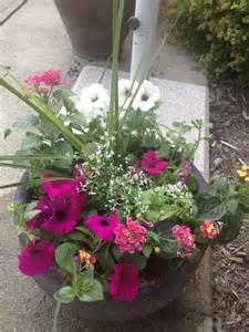 potted flowers for full sun gardening pinterest