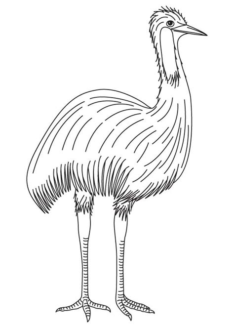 emu coloring page free free wombat colouring pages click emu platypus coloring