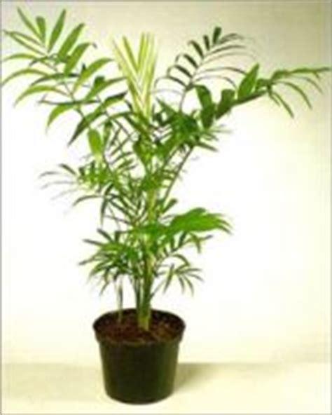 piante da interni poca luce piante da appartamento che non necessitano di troppa luce