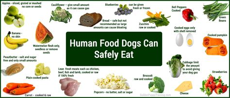 what of food can puppies eat image for page what human food can dogs eat leishmania in dogs suggested