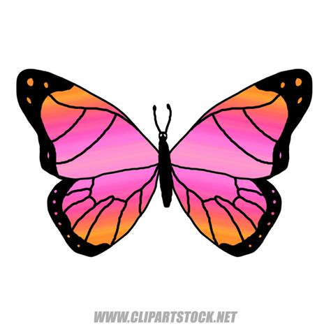 clipart pictures butterfly clipart clipart panda free clipart images