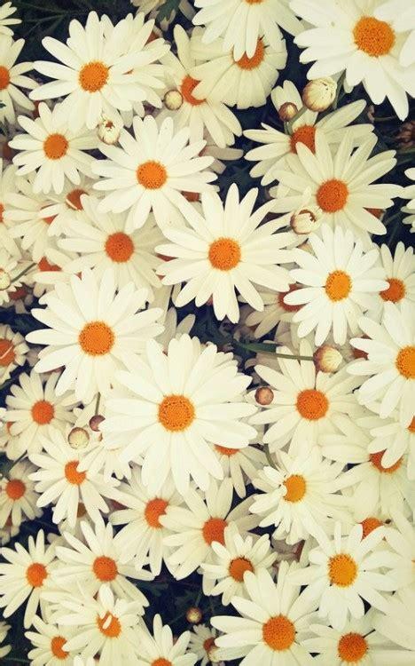 interesantes y bonitos fondos de escritorio de flores trending tumblr