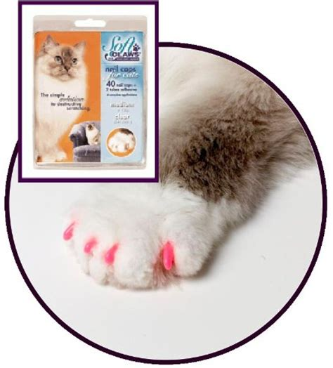 tappezzeria gatti soft nail caps for cats and kittens protect your family