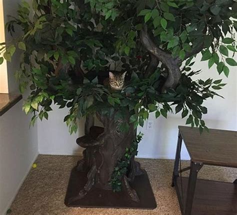 Cat Tree Big 10 Istana Kucing Cat Castle large cat trees a forest