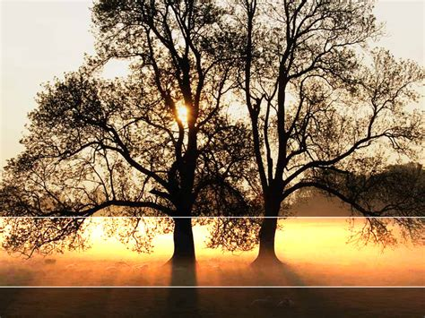 free powerpoint templates nature free tree sunlight landscape backgrounds for powerpoint