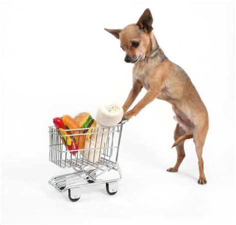 alimentazione chiwawa chihuahua alimentazione cani taglia mini scopri l