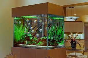 Home Aquarium Decorations Exotic Interior Decoration With Aquarium Aquarium