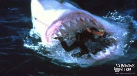 megalodon shark attacks boat megalodon shark attacks diver off japan caught on camera