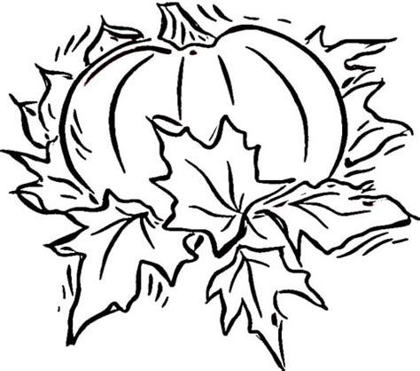 pumpkin leaf coloring pages pumpkin coloring page supercoloring com