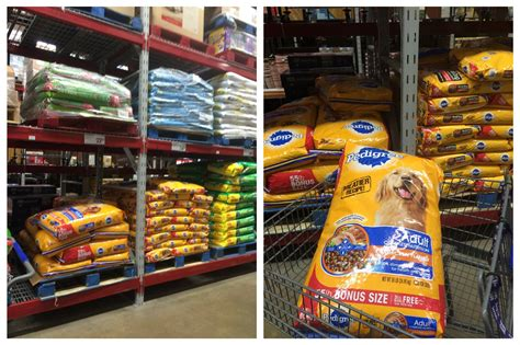 sams club dogs how adopting a can change your growing up bilingual