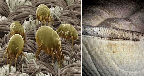 dust mites in bed more than 1 5 million dust mites are living in your