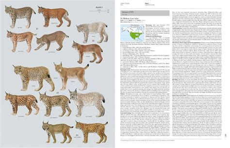 For The World Volume 1 handbook of the mammals of the world volume 1