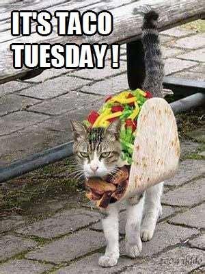taco tuesday kittyworks