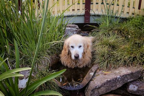 provide dogs access to water backyard ideas for dogs vail landscape logic column make a pet friendly yard on