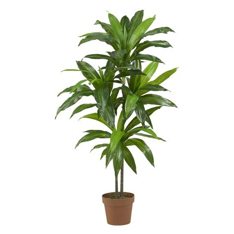 indoor potted plants fresh best indoor potted plants 19461