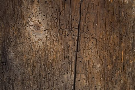 Wood Wall Texture free stock wood textures old wood cg textures free