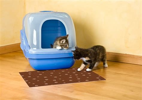 made in the usa forever cat food mat made in usa forever