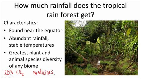 How Many Years Does It To Get Your Mba by 18 1 8 How Much Rainfall Does The Tropical Rainforest Get