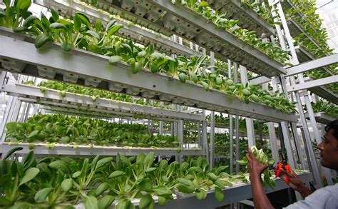 Seniors and Vertical Farming, Together at Last   Modern Farmer