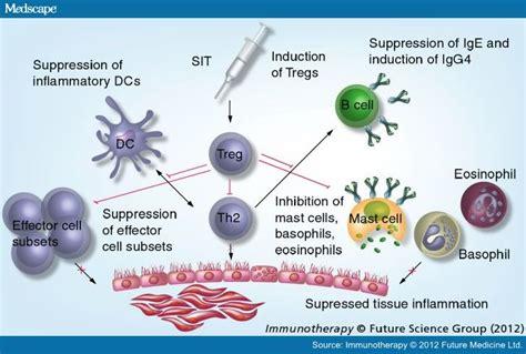 mechanisms of allergen specific immunotherapy image gallery immunotherapy allergic rhinitis