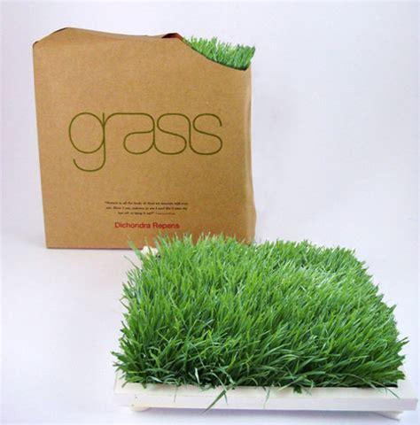Office Desk Grass Grass For Your Home Or Office Desk Inhabitat Green