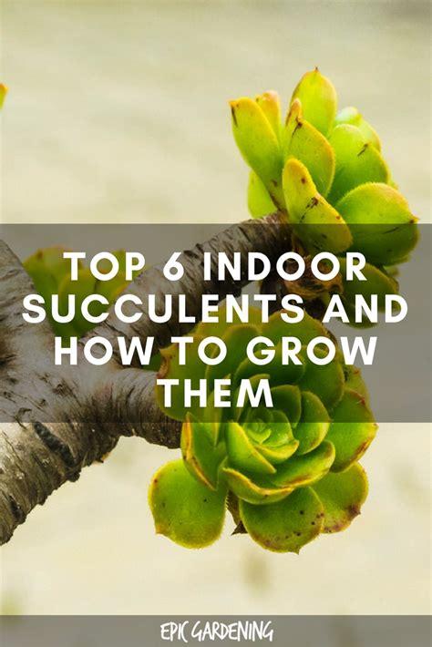 top  indoor succulents    care