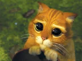 grosse len meine baby katze starrt mich st 228 ndig mit gro 223 en pupillen