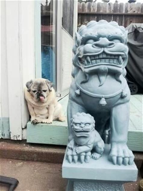 pug look alike 235 best images about who wore it best on pics fashion fail and