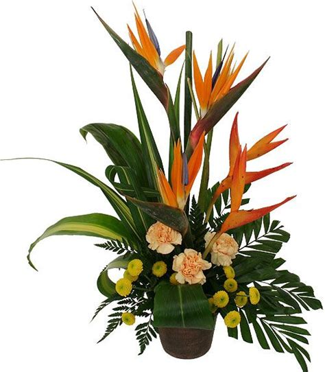 parrots in paradise kealakekua hawaii exotic bird contemporary tropical pedestal floral design triumph