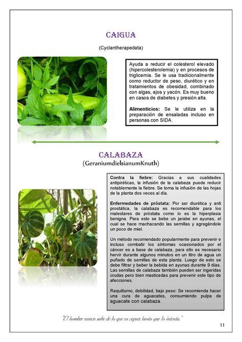Resumen Y Sus Caracteristicas by Plantas Nativas De Huancavelica Monografias